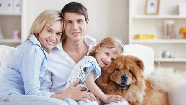 Wills & Trusts dog-young-family Direct Wills Chandlers Ford